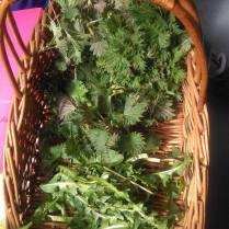 greens-basket-2