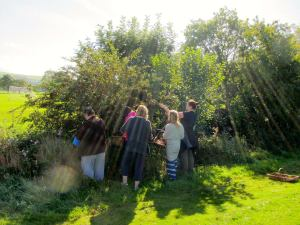 picking-hawthorn-sunbeam